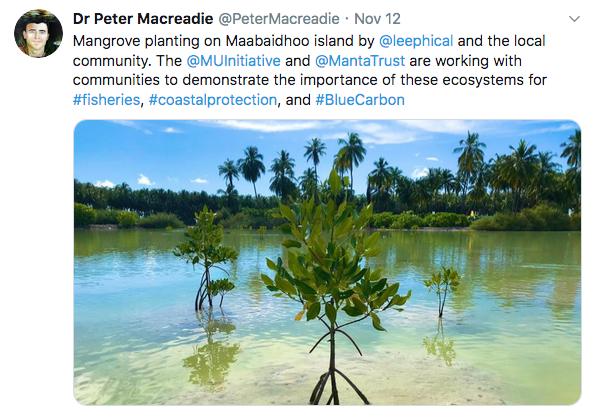 Maldives_Macreadie_tweets2