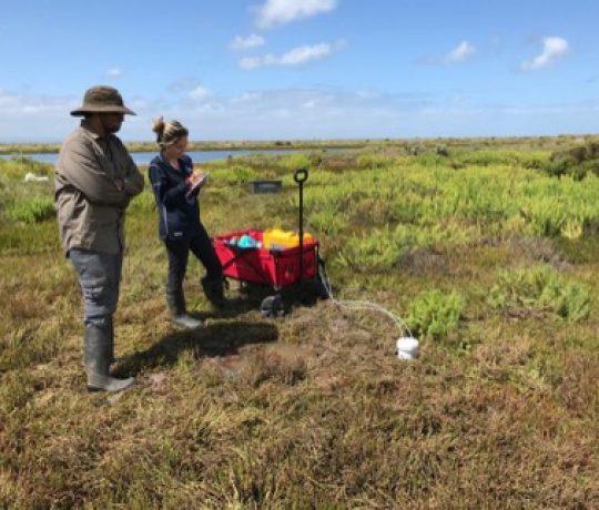 Saltmarsh fieldwork