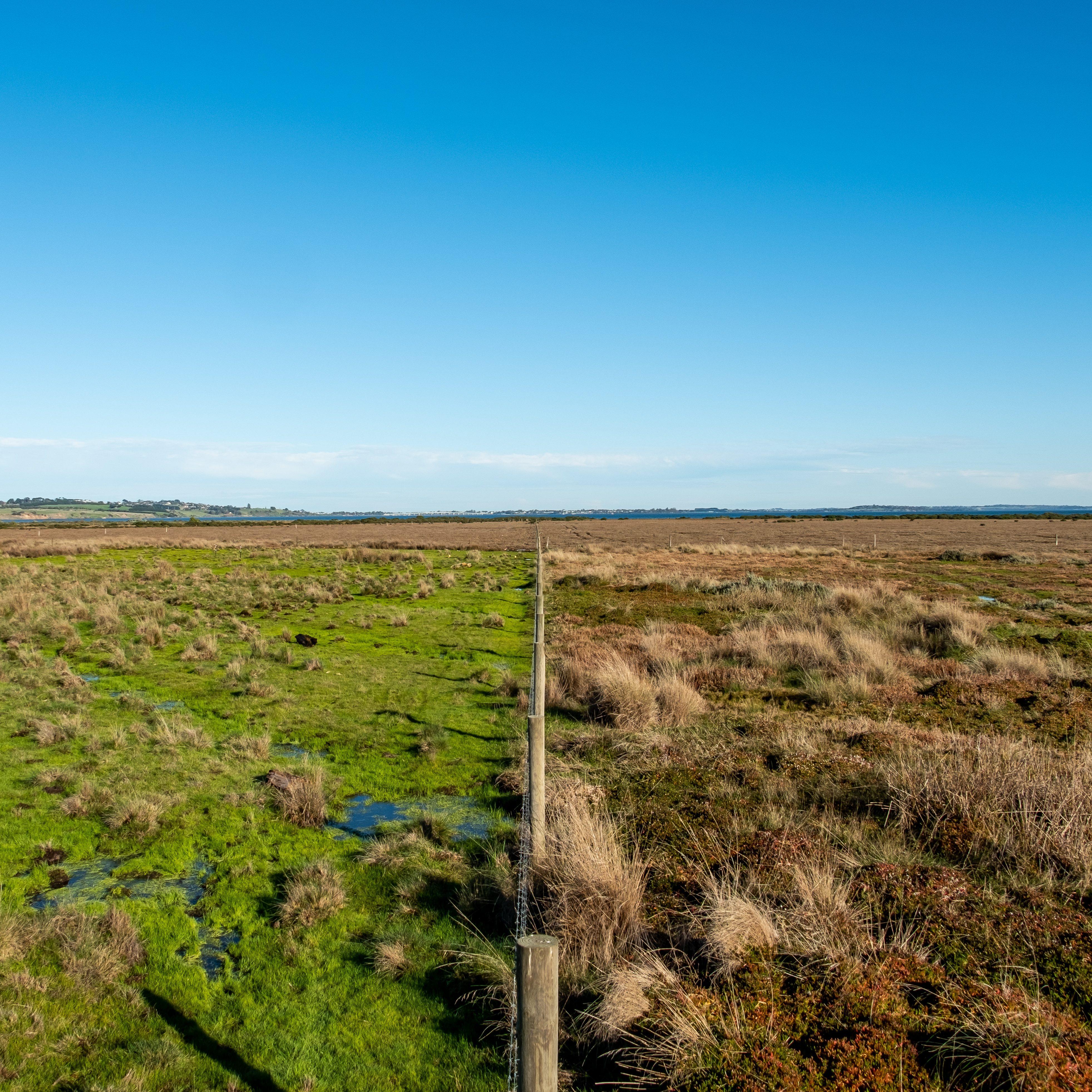 Victoria Wetland Restoration