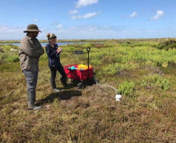 Saltmarsh fieldwork
