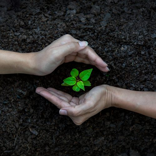 Ecology,Sapling,Tree,Growing,Up,And,Planting,On,Land.,Hands